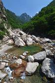 Wald-fluss im seoraksan, korea — Stockfoto