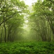 Stock Photo: Forest mystic way, Primorye, Russia
