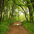 Forest mystic way, Primorye, Russia — Stockfoto #15449897