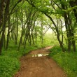 Forest mystic way, Primorye, Russia — Stockfoto