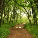 caminho místico de floresta, primorye, Rússia — Foto Stock