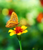Butterfly - monarch — Stock Photo