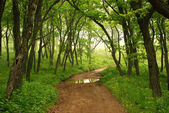 Forest mystic way, Primorye, Russia — Stock Photo