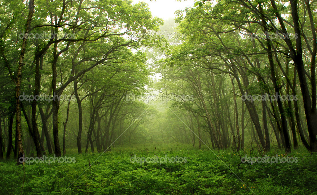 Forest mystic way, Primorye, Russia  Stock Photo #15449885