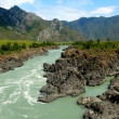 Mountain river Katun, Altai, Russia — Stock Photo