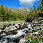 Mountain river Katun, Altai, Russia — Stock Photo #15450237
