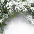 Branch of fir tree in snow — Stock Photo #15451131