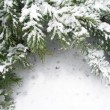 Branch of fir tree in snow - Stock Photo