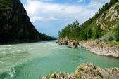 Mountain river Katun, Altai, Russia — Stock Photo