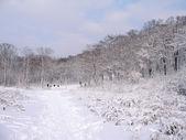 Zimní park — Stock fotografie
