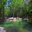 Forest river, green water — Stock Photo #30835061