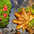 Autumn, red and yellow leaves on moss srones, wild river — Stock fotografie