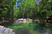 Forest river, green water — Stock Photo