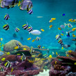 Fishes and coral, underwater life — Stock Photo #31905175