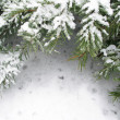 Branch of fir tree in snow — Foto Stock