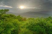 Zonsondergang over bos — Stockfoto
