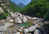 Forest river in Seoraksan, Korea — Stock Photo