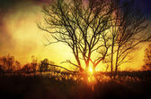 Beautiful sunset, trees in meadow, landscape against sun — Stock Photo