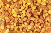 Raisins close-up — Stock Photo