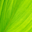 Stock Photo: Leaf close-up