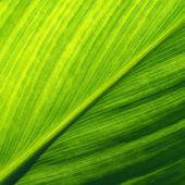Leaf close-up — Stock Photo
