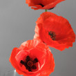 Three poppies — Stock Photo #20398473