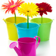 Gerberas in buckets — Stock Photo