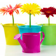 Gerberas in buckets — Stock Photo #21702007