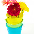 Gerberas in buckets — Stock Photo #22203727