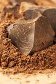 Cocoa mass and cocoa powder — Stock Photo