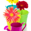 Gerberas in buckets — Stock Photo #24178605