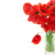 Poppy bunch — Stock Photo