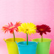 Gerberas in buckets - Stock Photo
