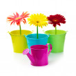 Gerberas in buckets — Stock Photo #30129965
