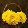 Chrysanthemum in basket — Stock Photo #35177023