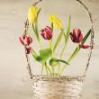Tulips in basket — Stock Photo