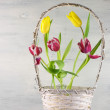 Tulips in basket — Stock Photo #40581813