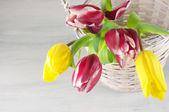 Tulipes dans le panier — Photo