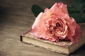 Rose and vintage book — Foto de Stock