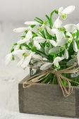 Snowdrops bouquet — Stock Photo