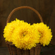 Chrysanthemum in basket — Stock Photo #46146925