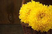 Chrysanthemum in basket — Foto Stock