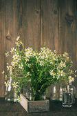 Chamomiles bouquet — Stock Photo