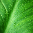 Wet green leaf close-up — Stock Photo #49736635