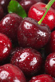 Wet cherries close-up — Stock Photo