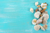 Seashells collecton — Stock Photo