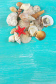 Seashells collection — Stock Photo