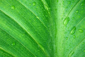 Wet green leaf close-up — Stock Photo