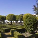 Gardens of the alcazar in Cordoba — Stock Photo #12418957