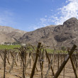 Vineyards — Stockfoto